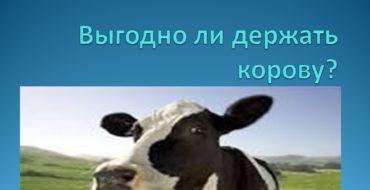 Выгодно ли держать корову?